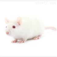 肾小球硬化动物模型外包