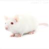 骨骼肌静力性损伤动物模型构建