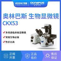 CKX53OLYMPUS奥林巴斯倒置生物显微镜CKX53