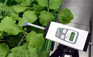 植物生理生态叶绿素荧光测量仪