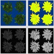 室内植物表型成像分析系统