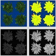 WIWAM室内植物表型成像分析系统