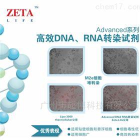 AD600025Advanced DNA RNA Transfection Reagent