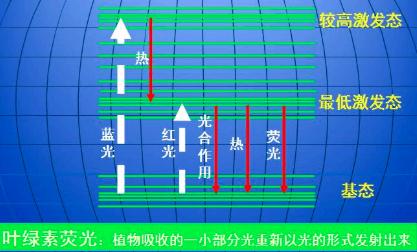 叶绿素荧光测定仪
