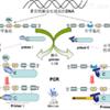 DNA CpG甲基化检测服务